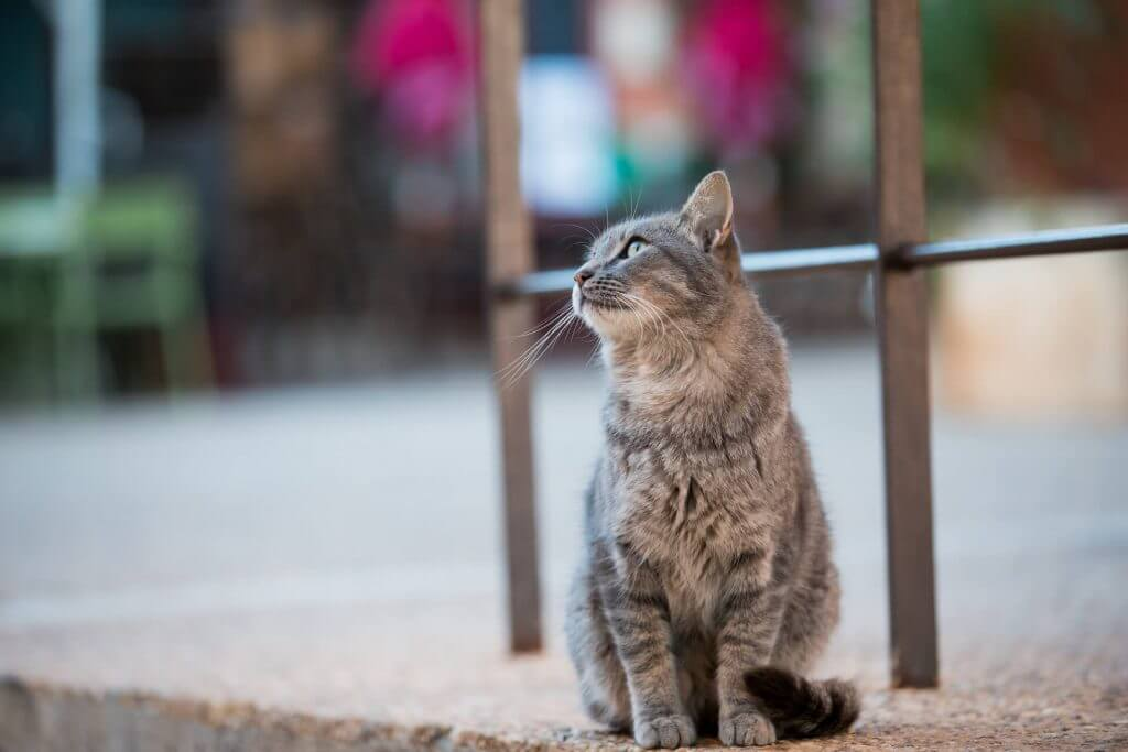 Local moggy in Roussillon