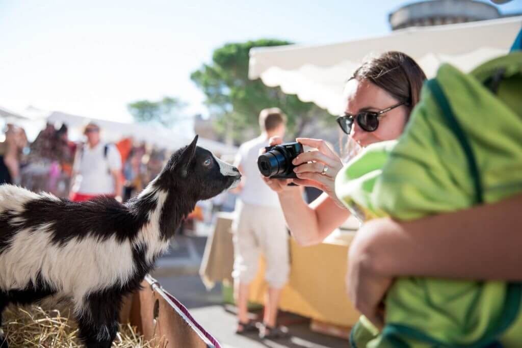A tourist photographs the baby goat at the farmer's market being used to raise money for animal rescue (allegedly). It was so cute and only a baby.