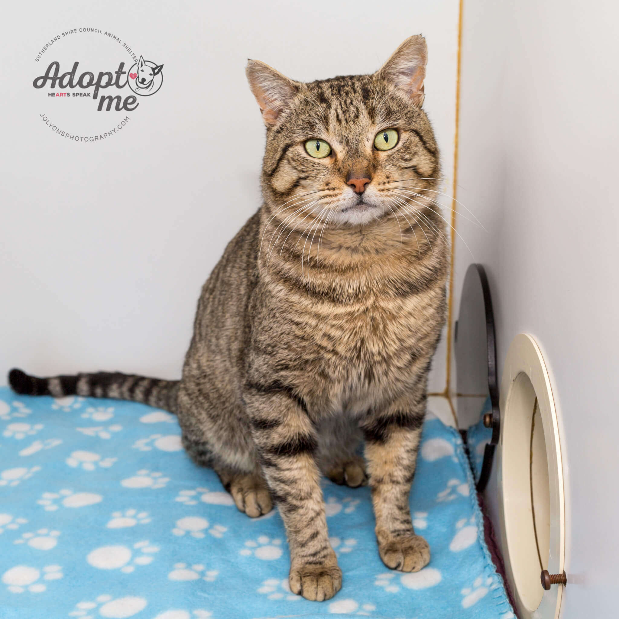 Maurice - Adopt Me!