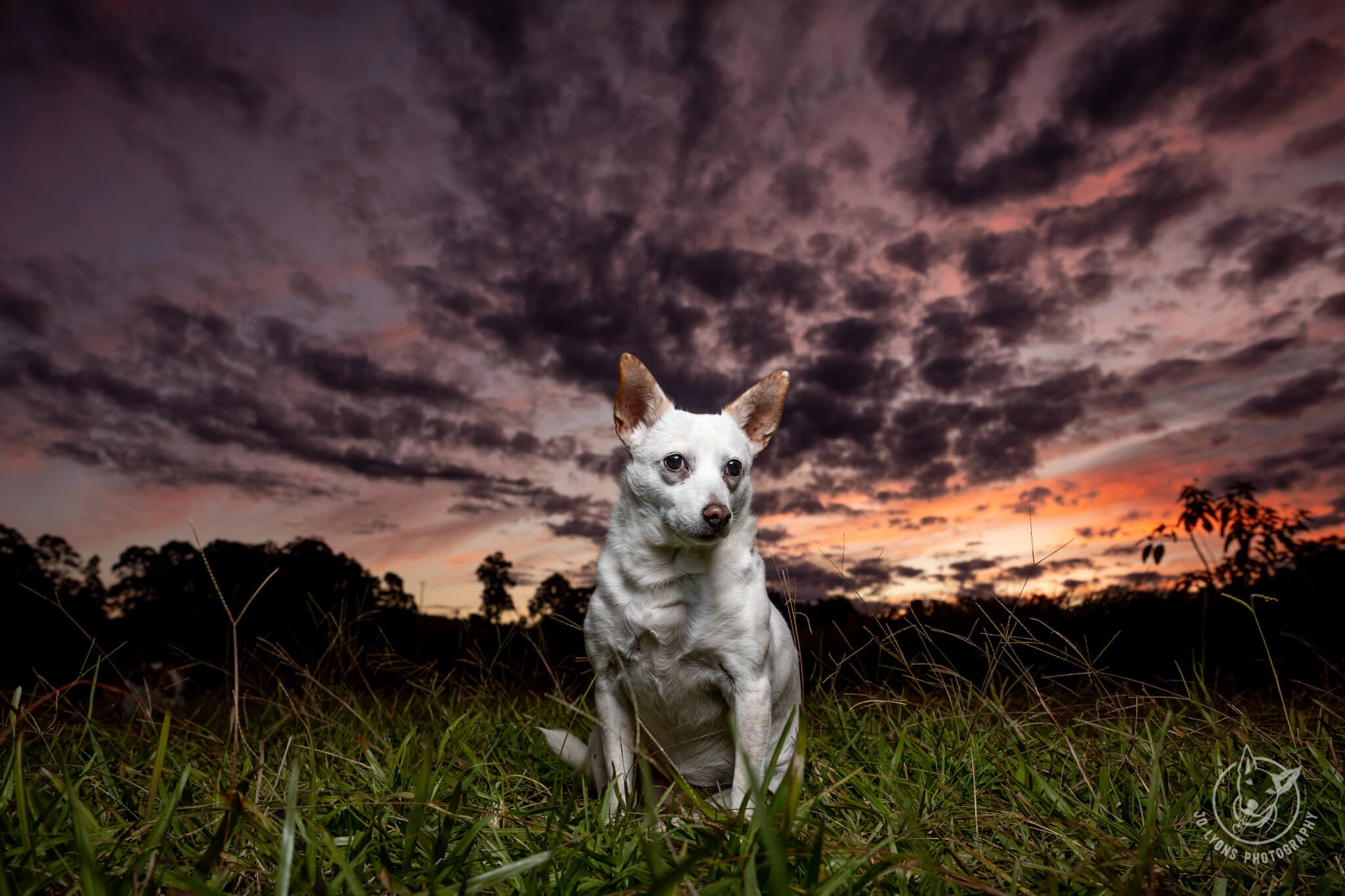 Leading Lines with Dogs and a Sunset on the farm in Wootton, NSW