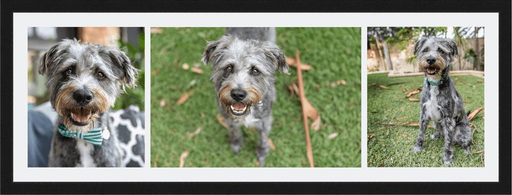 Alfie the dog - Large Storyboard