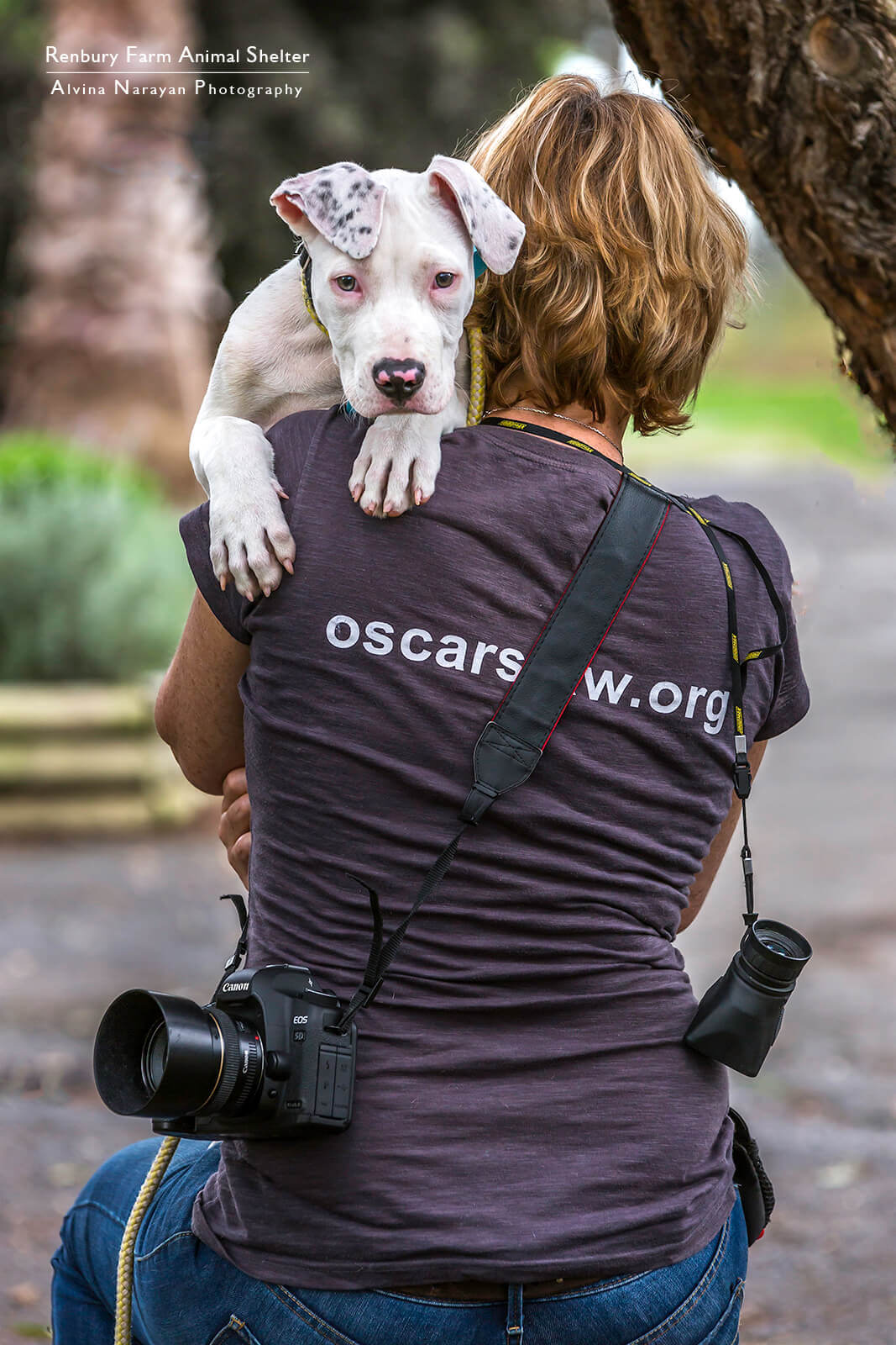 Jo Lyons Photography - Volunteer Animal Rescue Photographer