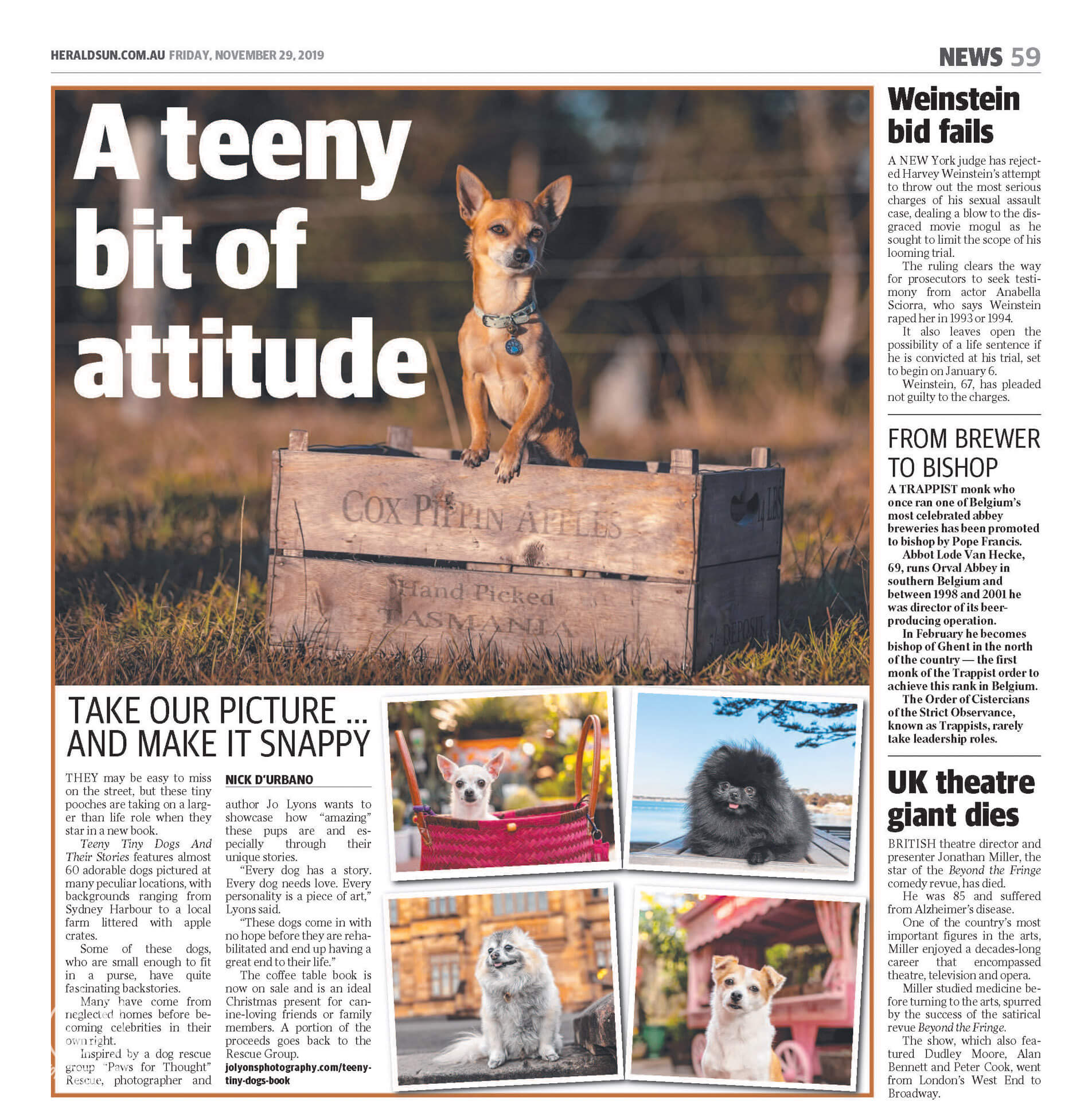 Teeny Tiny Dogs article in the Herald Sun. Deer-headed Chihuahua on apple box sunset