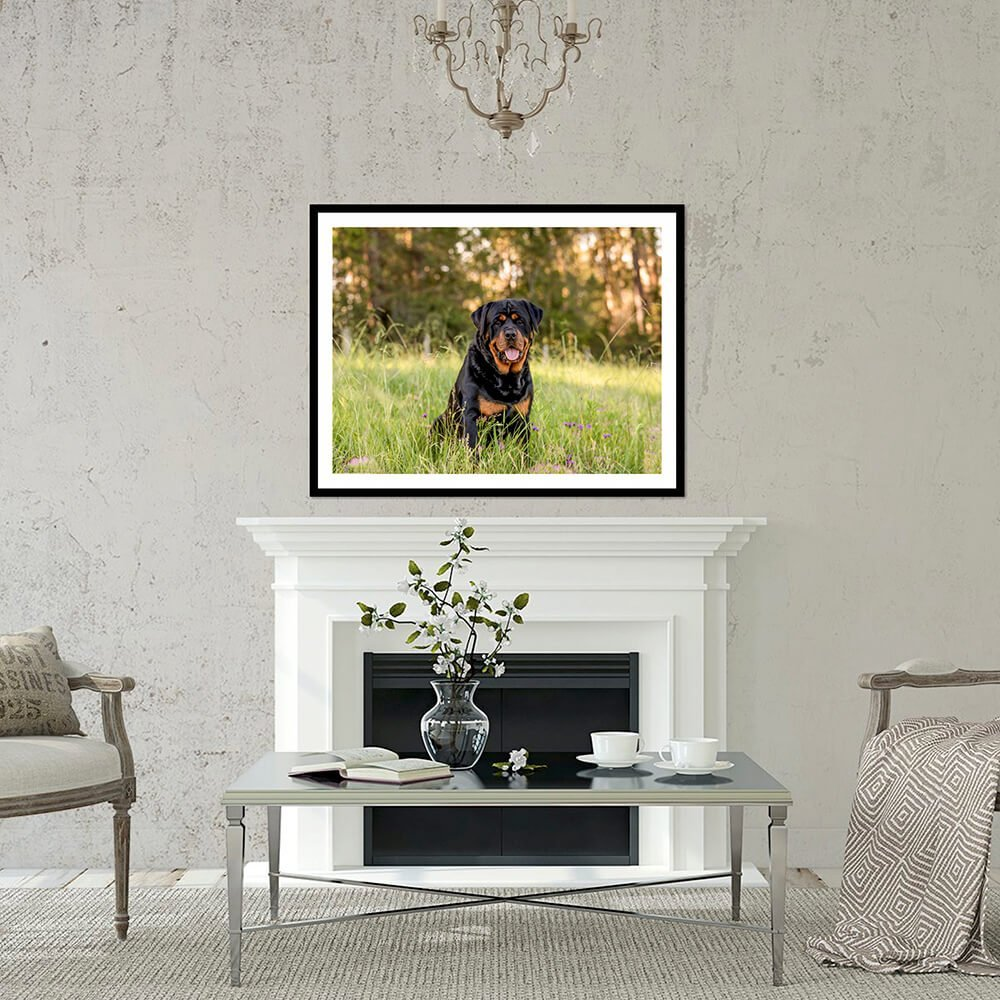 Luther the Rottweiler the professional portrait - Wall Art In Situ