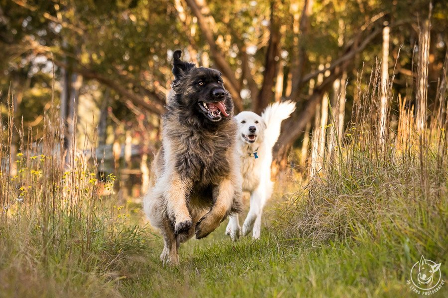 8 QUICK TIPS TO PREPARE YOUR DOG FOR THEIR PHOTO SESSION