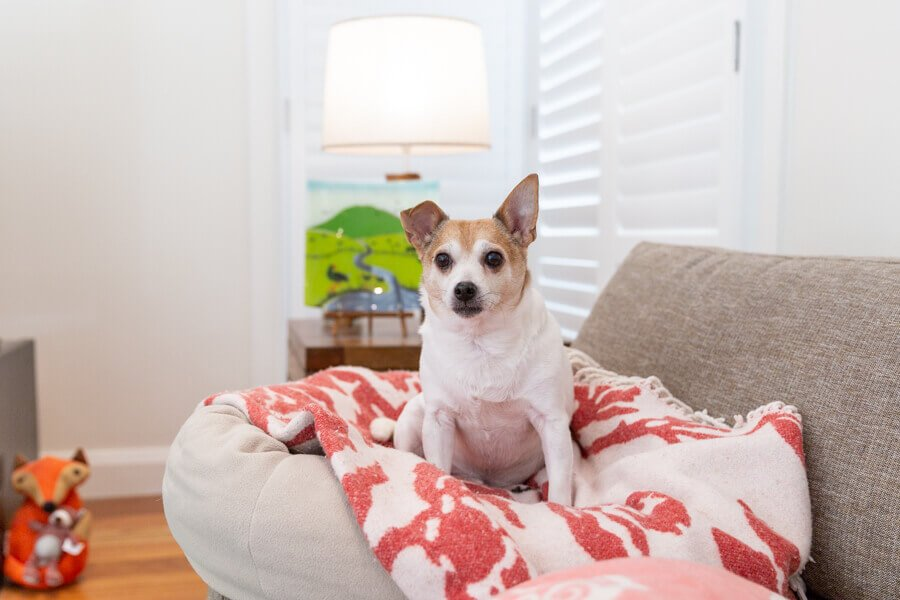 Dog Photography at Home Sydney