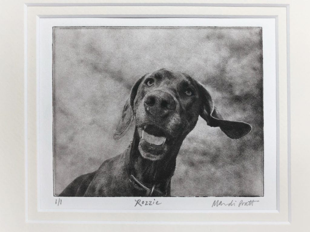 Greyboy Pet Etching in a mat