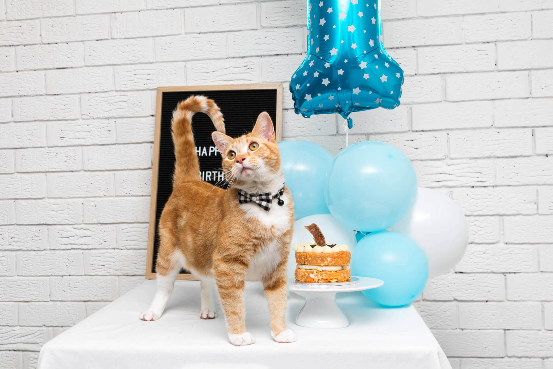 Lennon the ginger cat with birthday cake and baloon
