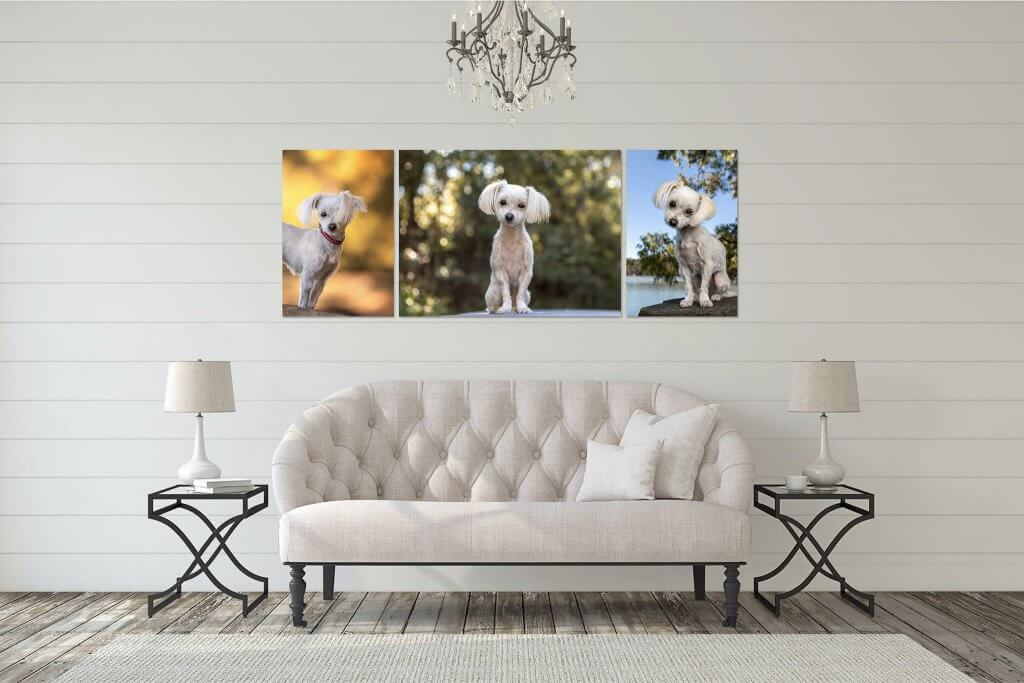 Jo Lyons Photography White Maltese Terrier Canvas Collection. White Dogs light my world.