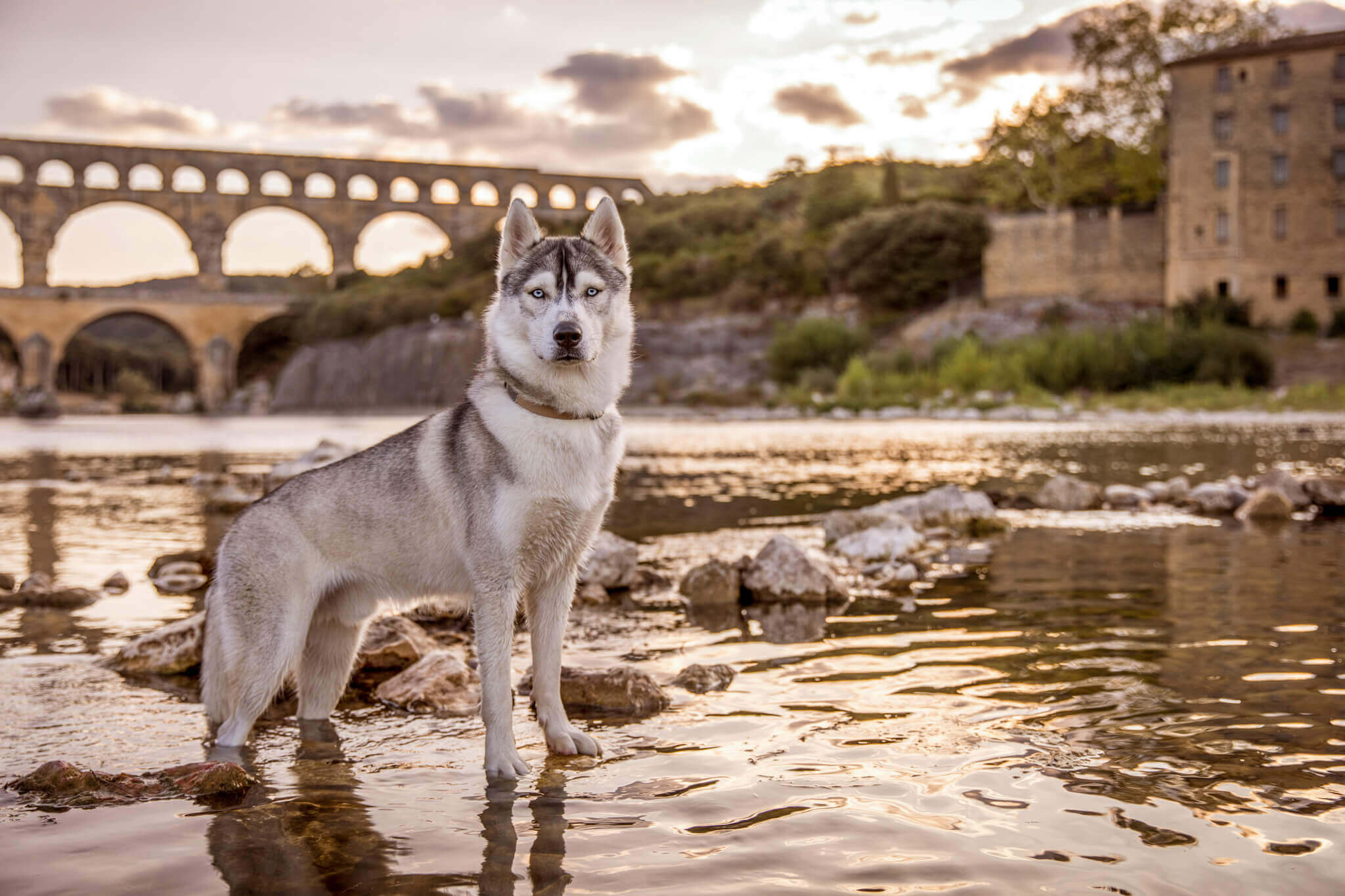 Mitsuo the Husky at the Pont du Gard