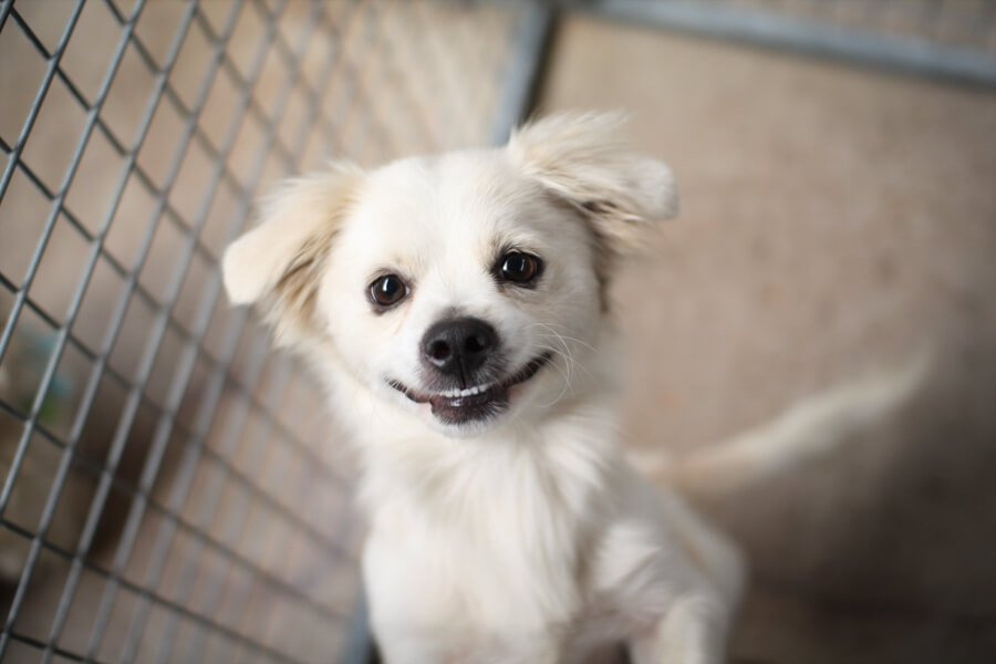 Cute blonde dog smiling at the photography