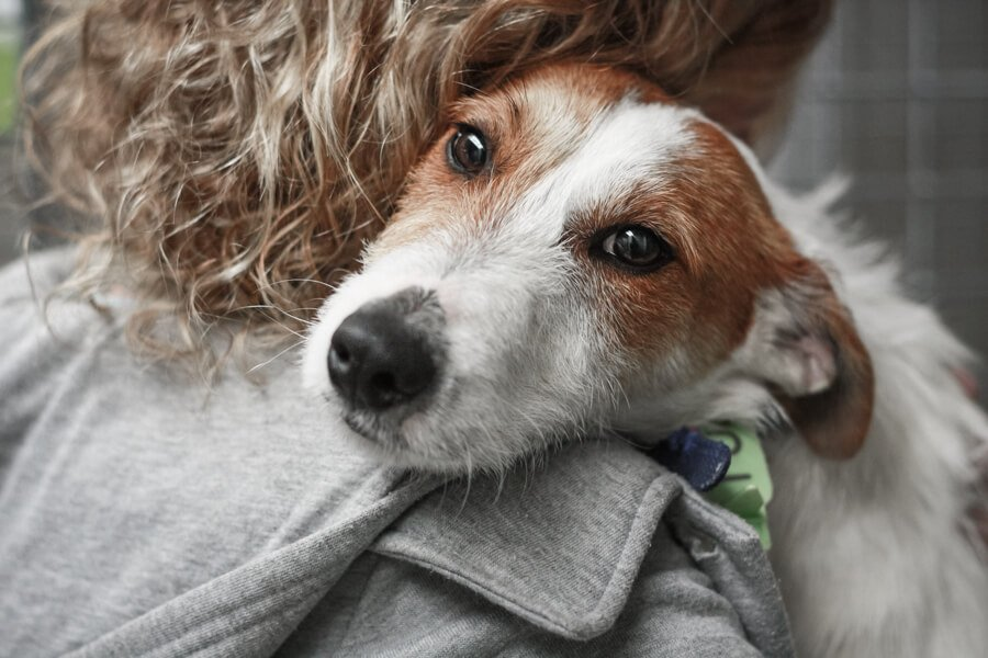 Giving back to save lives through great photography. Wire haired Jack Russell Terrier being hugged