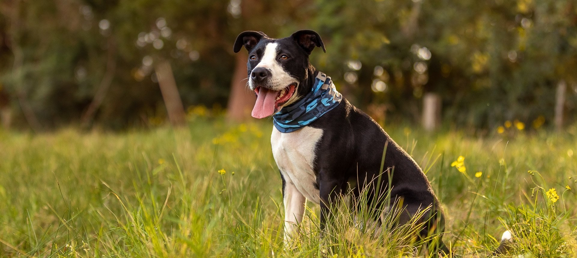 8quick tips to help you prepare your dog for their photo session