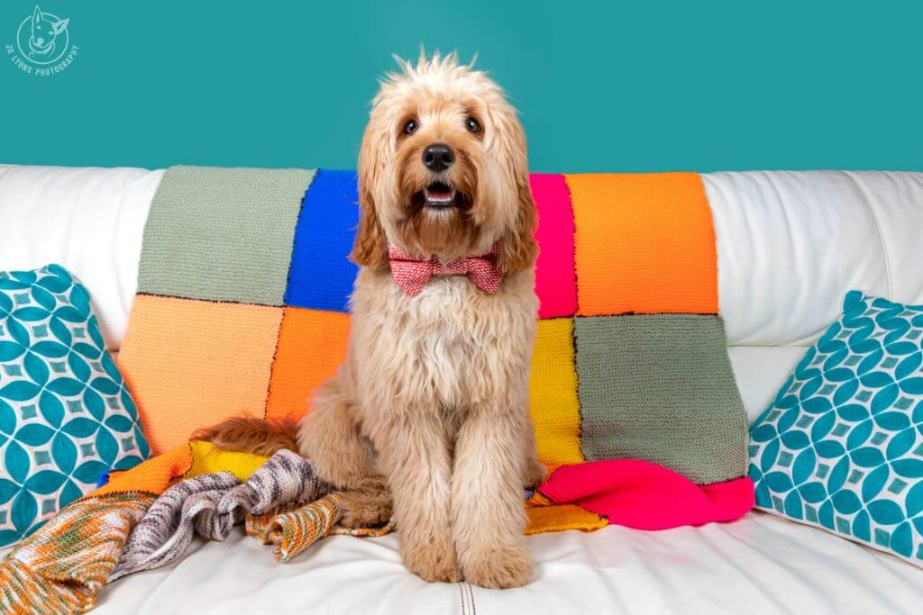 Sunday Sessions 2018-Atticus the Cavoodle
