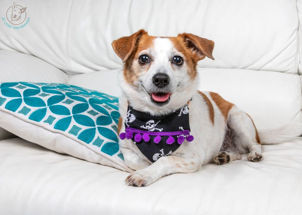 Sunday Sessions 2018-Coco the Jack Russell Terrier