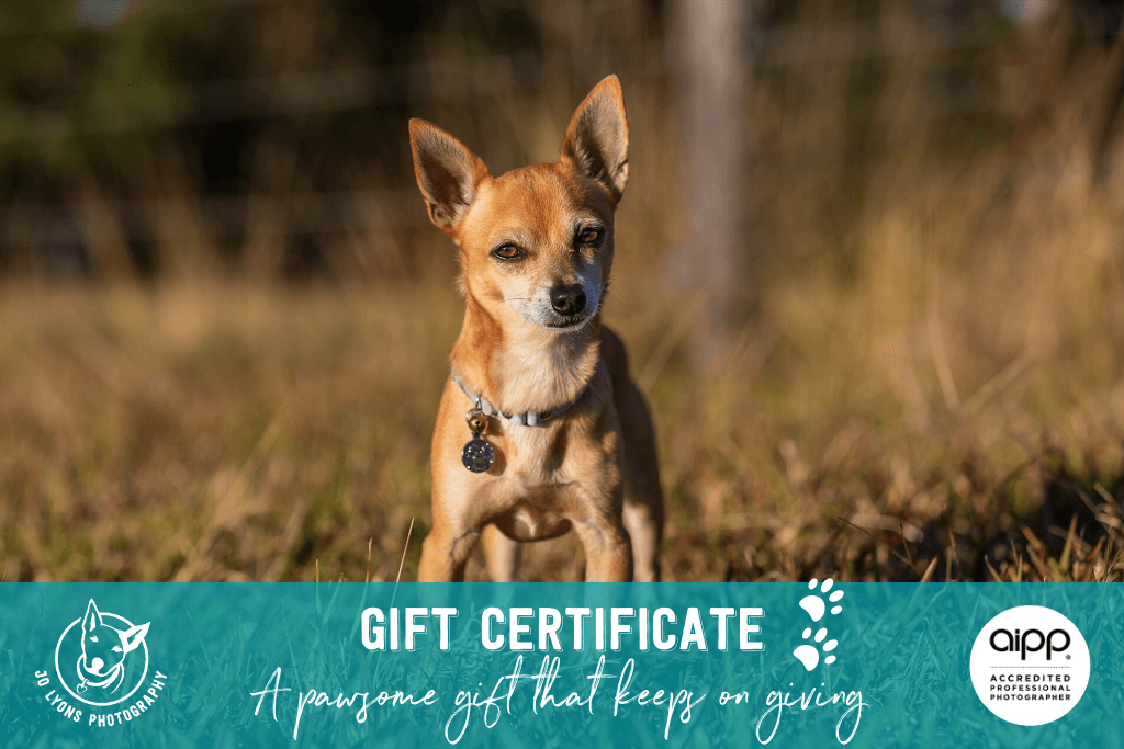 Dog Photography Gift Certificate