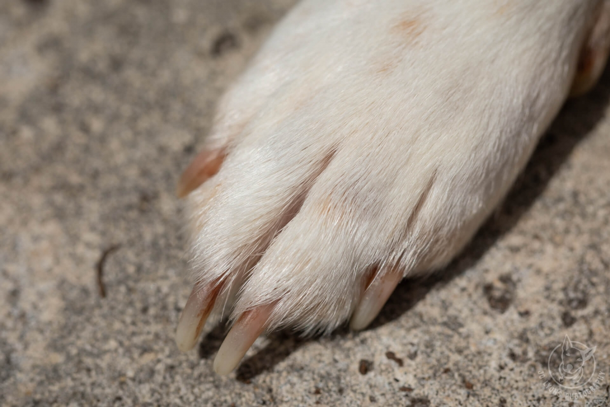 Shiny dog nails on dog paw