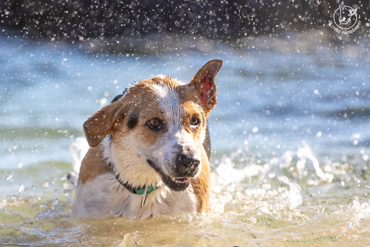 Henry the dog swimming at the beach