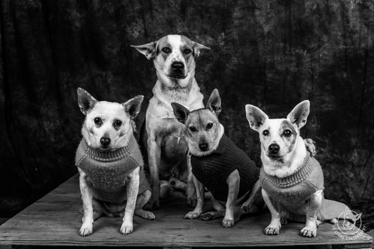 The whole furry Lyons fam bam. L-R Luna, Henry, Harvey and Daisy.