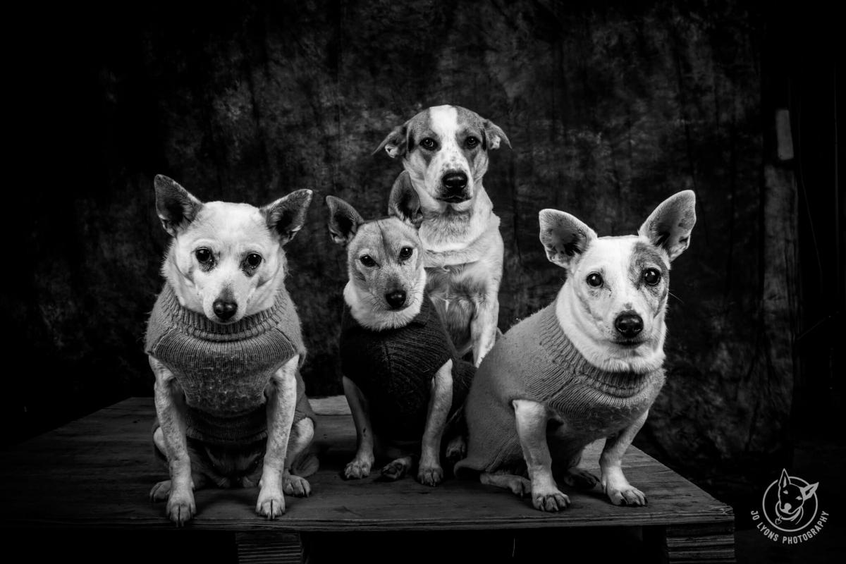The whole furry Lyons fam bam. L-R Luna, Harvey, Henry and Daisy.