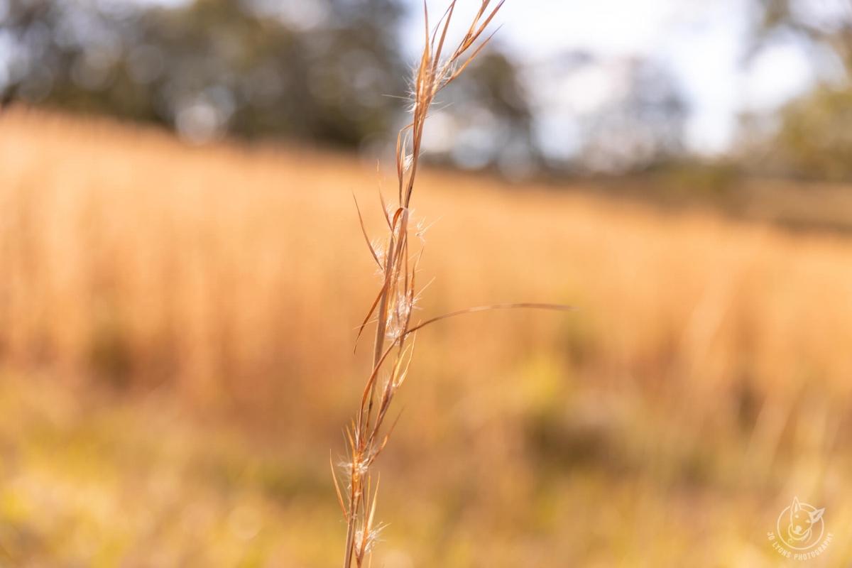 Blog Landscape Farm Wootton