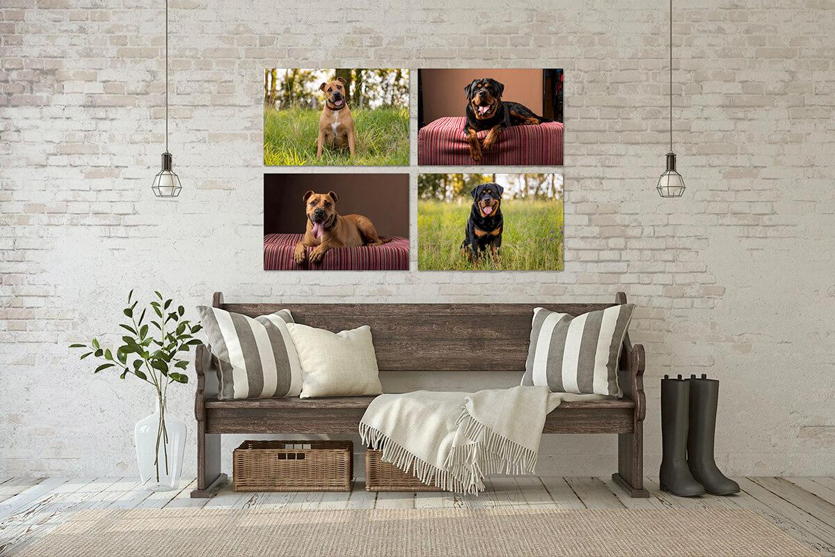 Canvas Collection - 4 20x30 inch canvas. Black and tan Rottweiler Dog. Tan and white American Staff Dog. New beginnings for a new decade