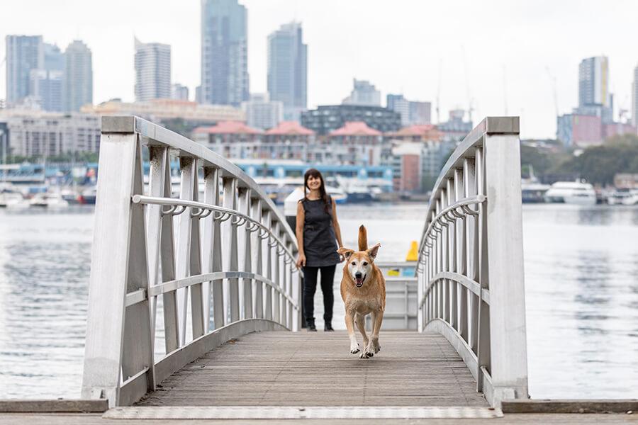 CityLife-Greek Stray to Loved Sydney Dog-15