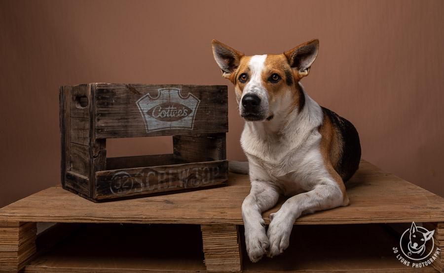 We have some rustic props we can include like this vintage Cottees box