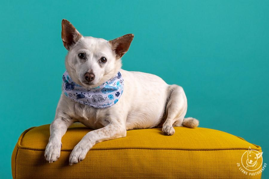 Teal backdrop with yellow ottoman and colourful bandana