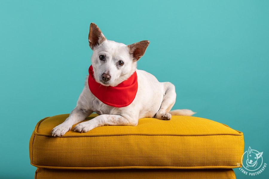 Teal backdrop with yellow ottoman and red bandana