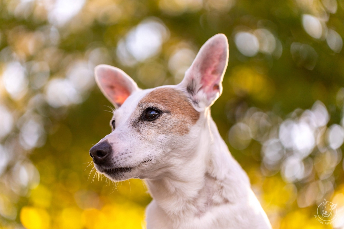 Dogs and Bokeh-11