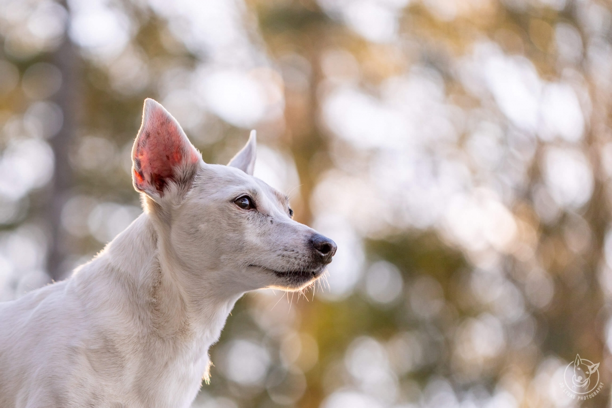 Dogs and Bokeh-16