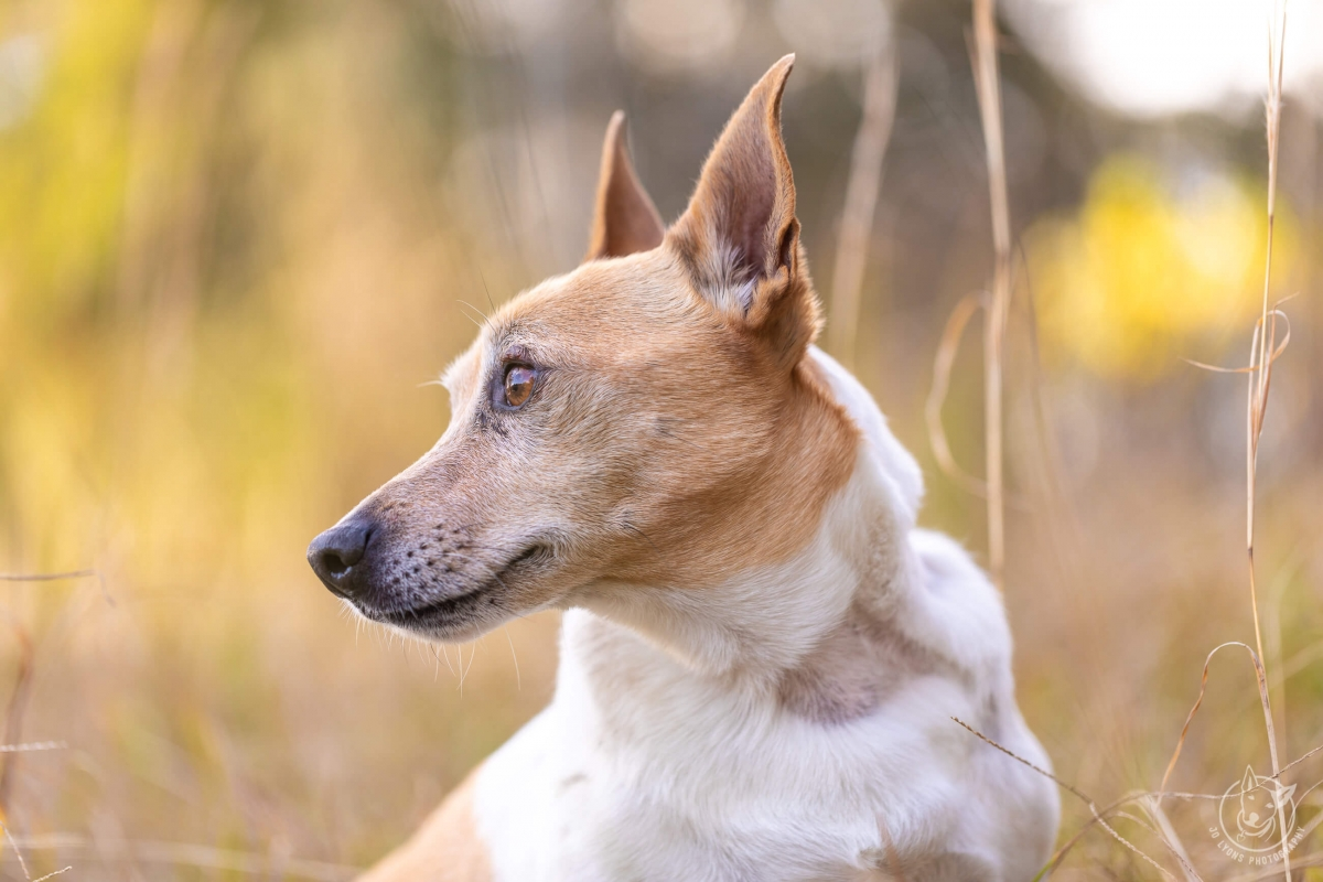 Dogs and Bokeh-5