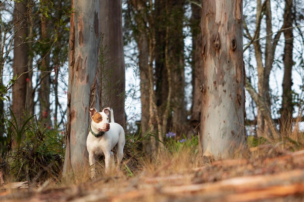 Jo Lyons Photography Destination Farm Wootton NSW-001