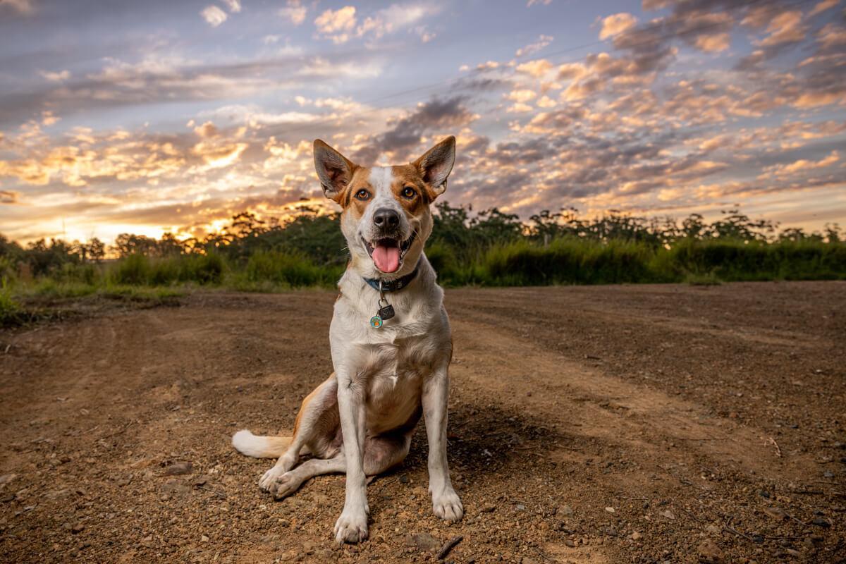 Jo Lyons Photography Destination Farm Wootton NSW-002