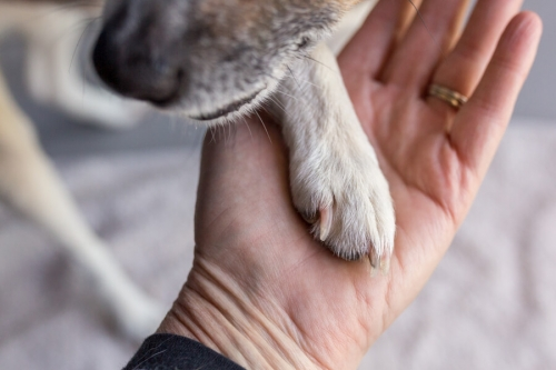 Paw in Hand Gallery