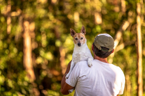 Jack Russell Terrier Harvey on his Dad's shoulders with our forest behind.