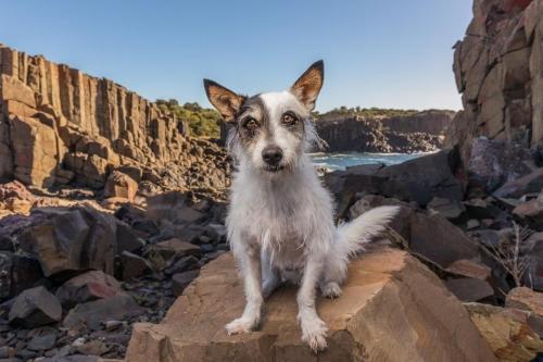 Jo Lyons Photography-Oscar at Bombo Rocks