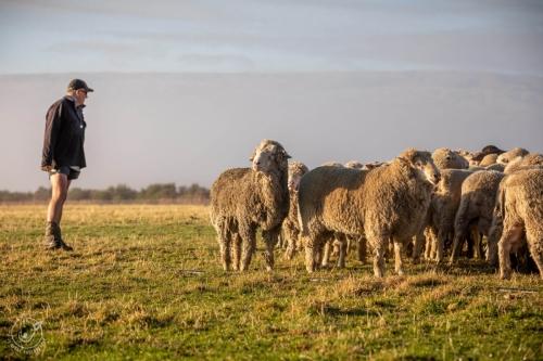 Web-week2-sheepfarm-sheep-jolyons-038
