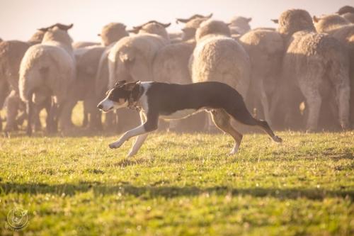 Web-week2-sheepfarm-sheep-jolyons-039
