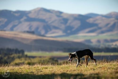 Web-week2-sheepfarm-sheep-jolyons-041
