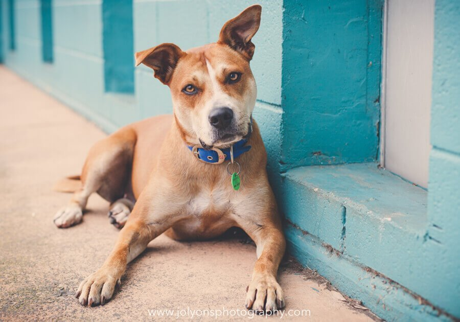 Photographing shelter pet tips