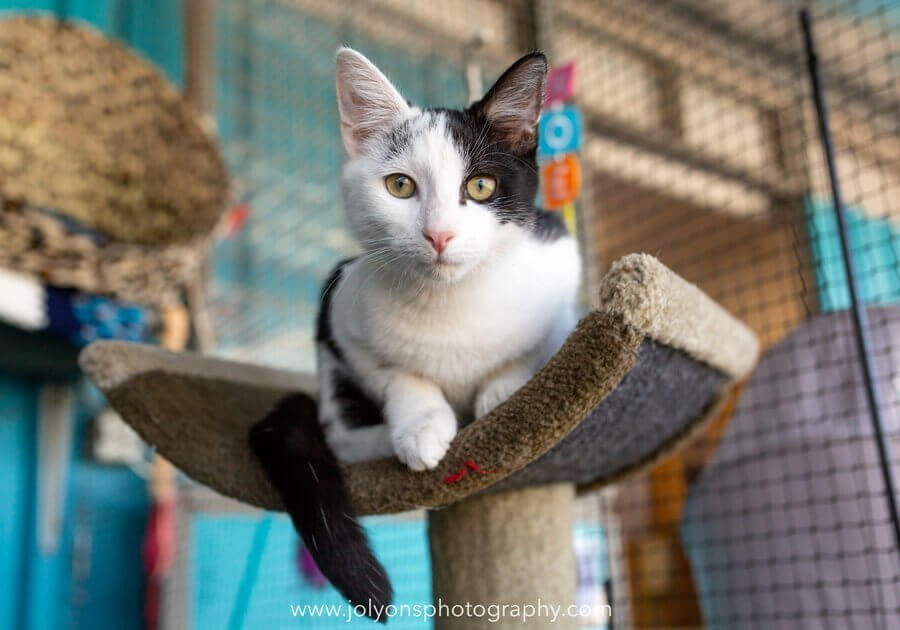 Tips for photographing shelter pets